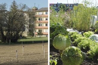 Krautgarten in Berg am Laim